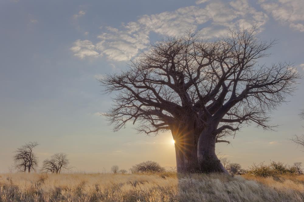 baobab_20170612_02